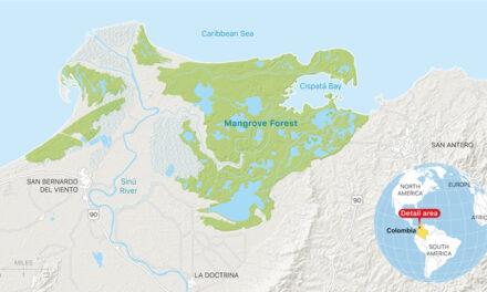 Bevarar mangroven, en av världens livlinor