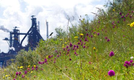 Tata Steel undersöker möjligheten att lagra koldioxid i tomma gasfält under Nordsjön