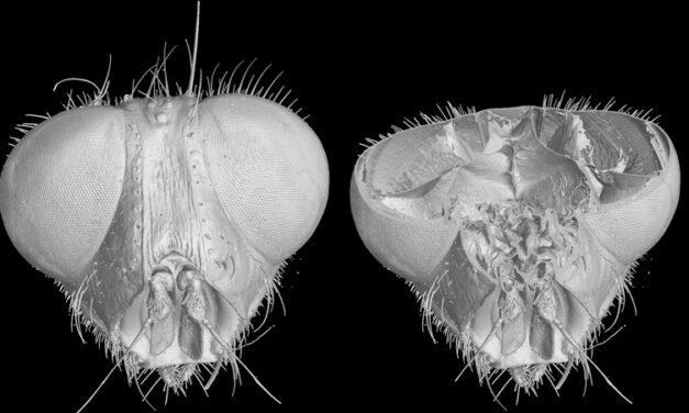 Titta in i flugans huvud – eller i flygplansdelen