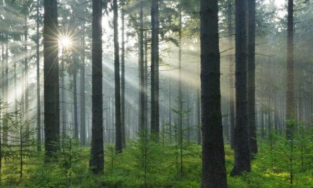 Startskottet för tvärvetenskaplig forskning kring trä och hälsa